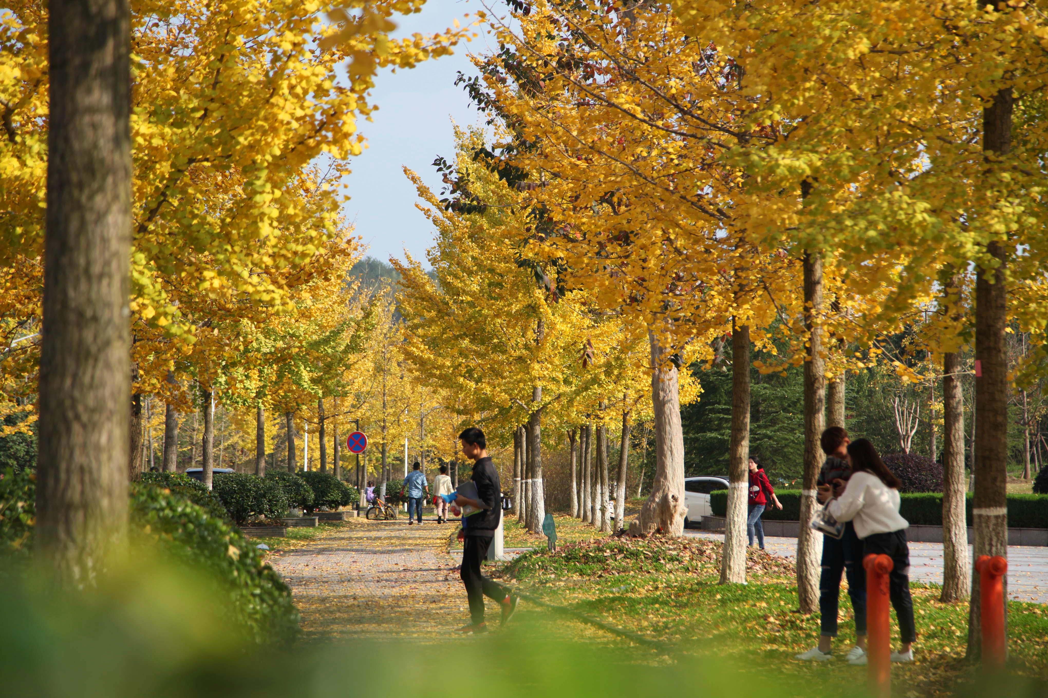 校园超清风景图片